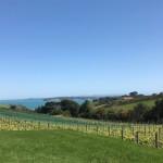 Spektakulärer Blick vom Weingut herunter in die Bucht.