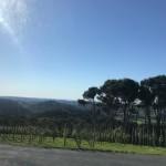 Blick aus dem Busfenster auf der Rückfahrt nach Matiatia (Hafen)