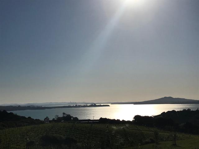 Blick hinüber nach Auckland vom Mudbrick Vineyard.
