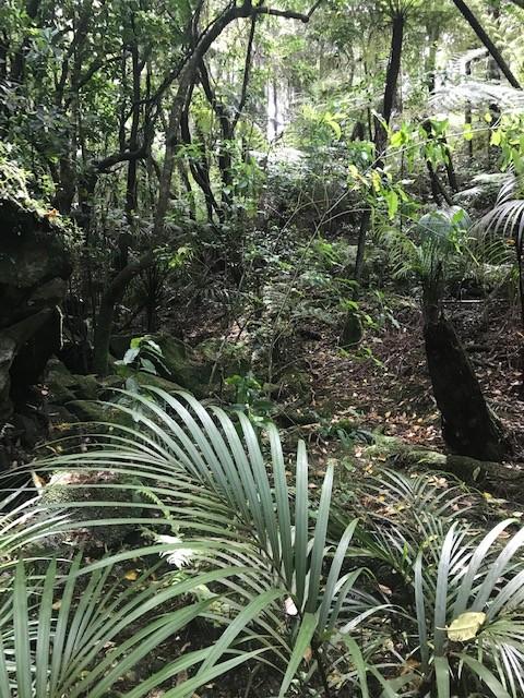 Subtropische Vegetation mit vielen Farnen