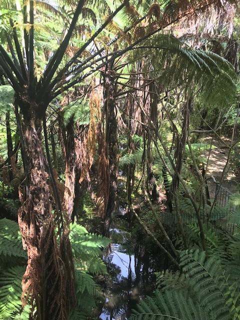 Und Palmen