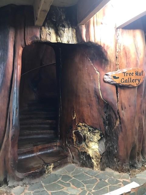 Das Innere eines uralten Kauribaumes, der vor tausenden von Jahren starb und in einem Pechsumpf konserviert wurde.
