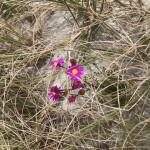 Und dann blühen da auch noch diese wunderhübschen kleinen Blumen.