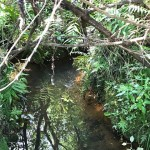 Ein kleiner Fluss führt durch den Wald.